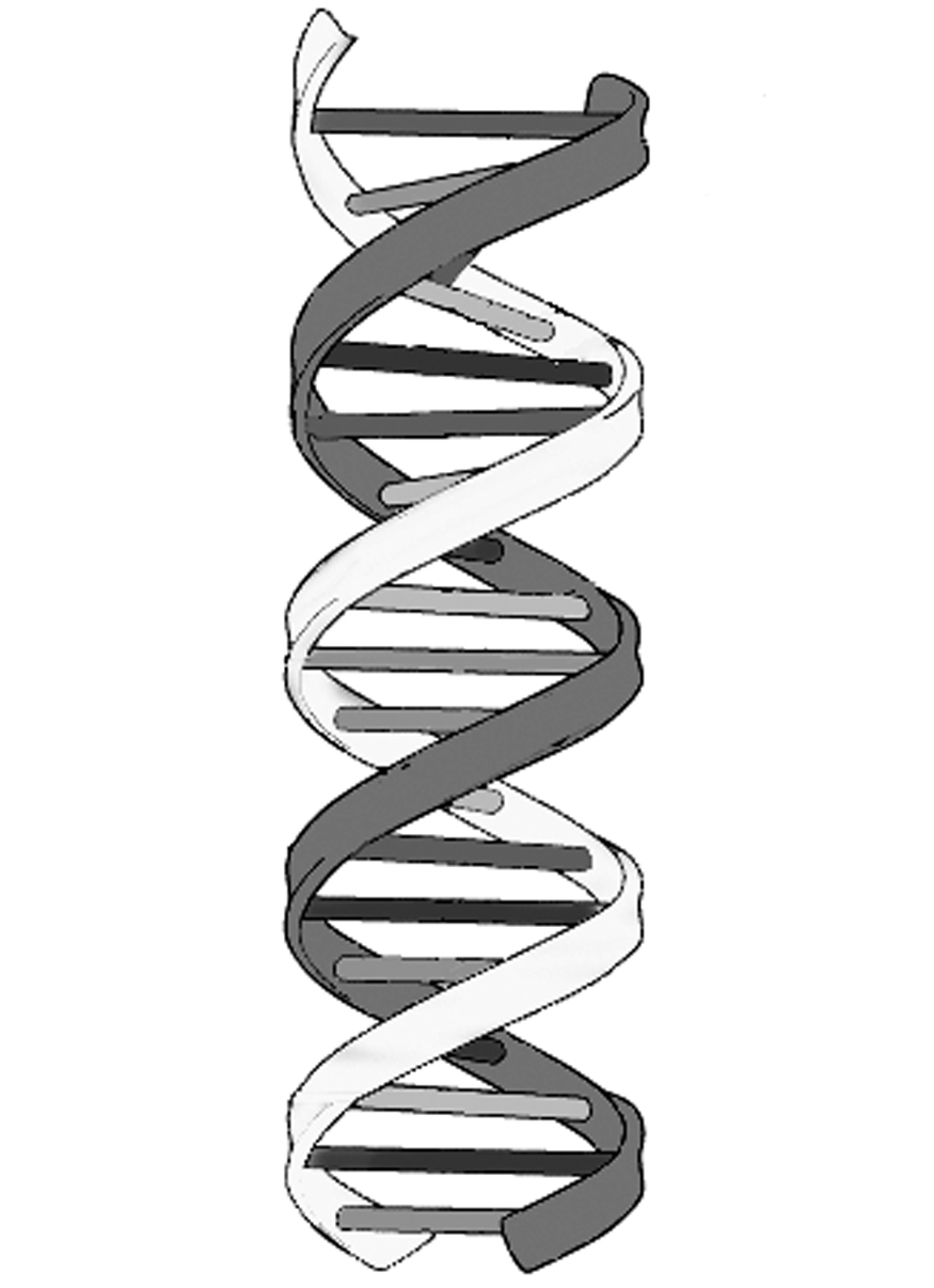 It's just a picture of Sweet Drawing Of Dna